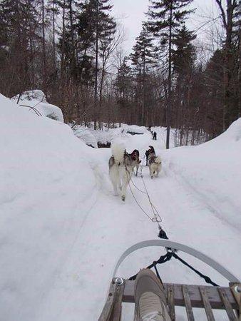 Auberge Duchesnay: sortie traineaux a chien