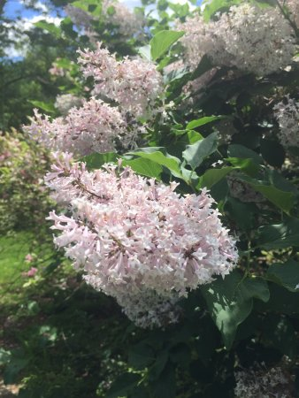 Preston, CT: Butterflies love this bush!