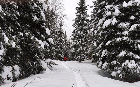 Presque Isle, ME: Snowshoe trails.