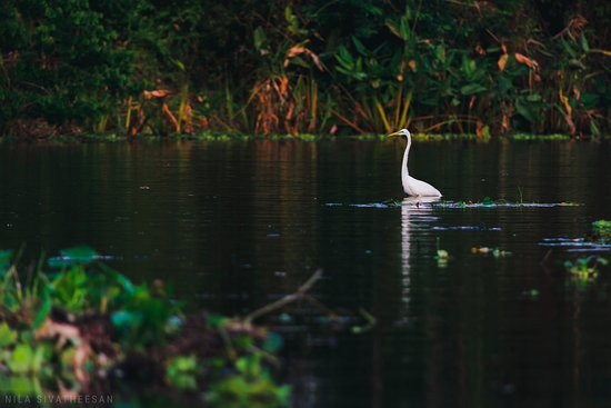 No Rush Tours: We saw so many different birds, and a howler monkey! Pictured here is an egret.