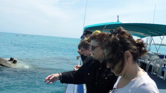 Hamilton, Bermuda: on thereef Explorer