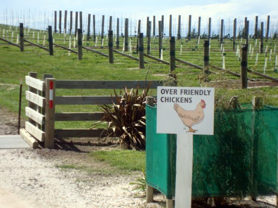 Seddon, New Zealand: Yealands Vineyard