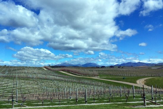 Seddon, New Zealand: Yealands Vineyards