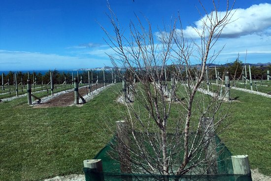 Yealands Estate Winery: Yealands Vineyard