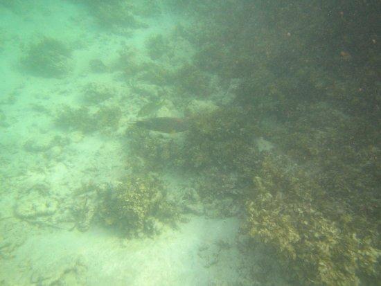 Остров Праслен, Сейшельские острова: Anse Boudin