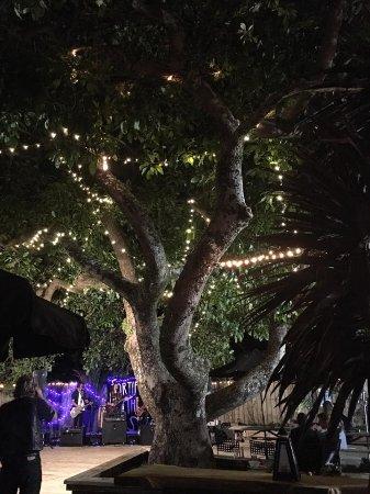 Katikati, New Zealand: Avocado tree in the Garden Bar