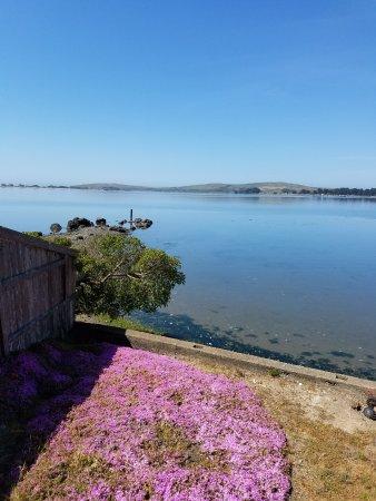 Bodega Harbor Inn: view from deck of room