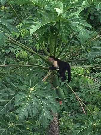 Mal Pais, Costa Rica: photo1.jpg