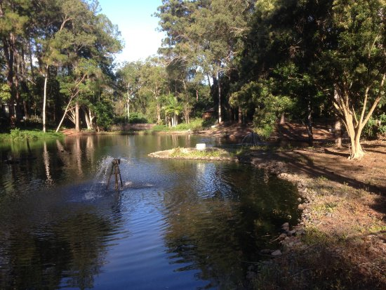 The Lagoon in the tourist camping area of the Pines Caravan Park, Landsborough.