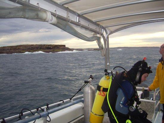Swansea, Australien: Moon Island boat dive