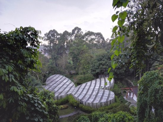 Jardin Botanico del Quindio: Mariposario
