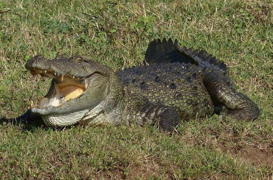 Yala Safari Private Day Trip from...
