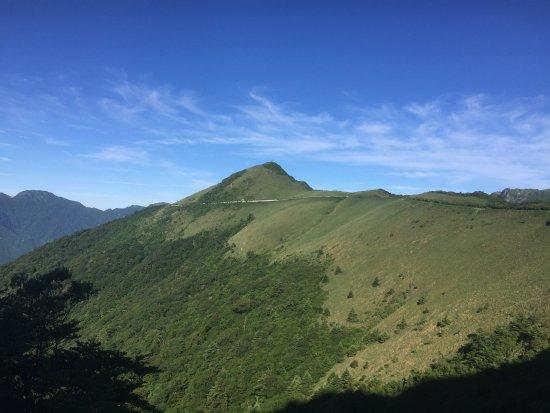 Kamegamori Forest
