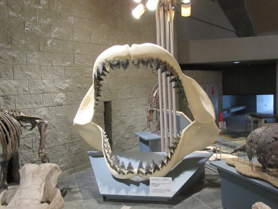 This is a huge toothy grin - ...