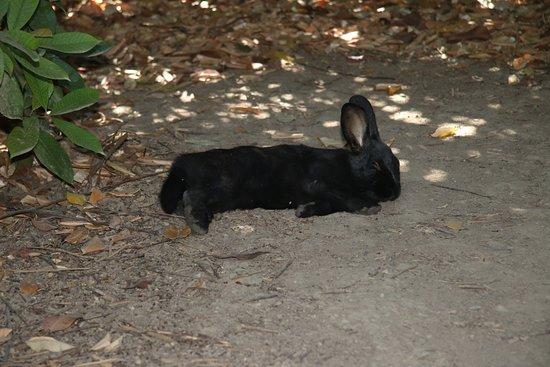 La Roque-d'Antheron, ฝรั่งเศส: petit lapin dans le labyrinthe