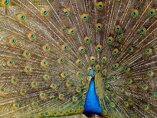 Andhra Pradesh, India: Nagarjuna Srisailam Wildlife