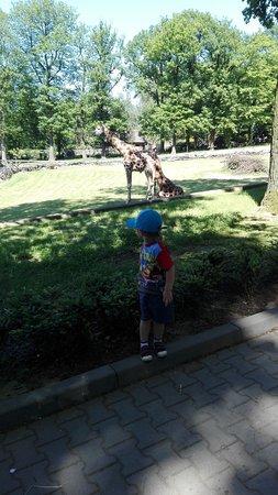 Krakow Zoo (Ogrod Zoologiczny): IMG_20170603_151347_large.jpg
