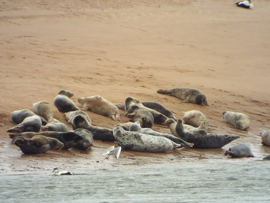 Newburgh, UK: The seals are a must see.