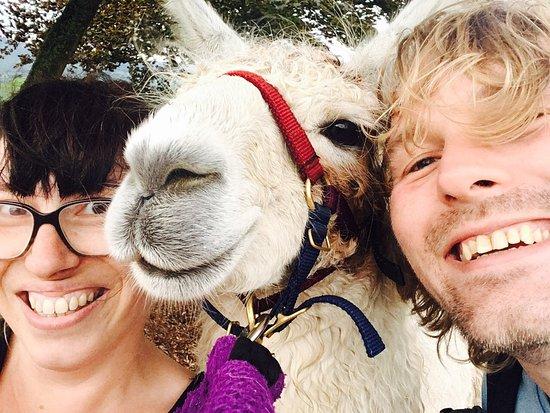Nidderdale Llamas: photo0.jpg