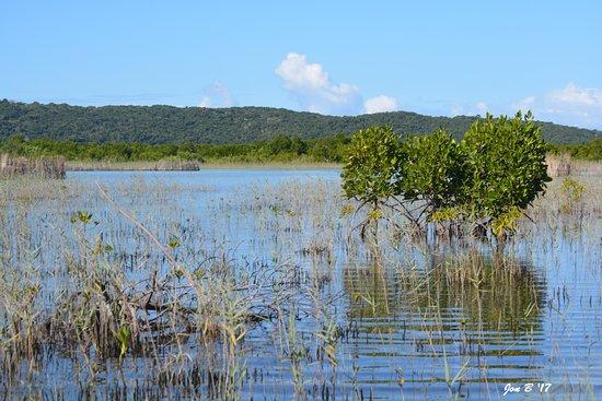 St Lucia, South Africa: Kosi Bay , KZN