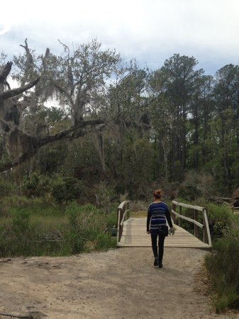 Skidaway Island State Park : Spanish moss
