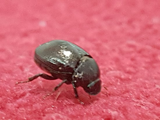 Season Bungalow: Tick on the red blanket in my room