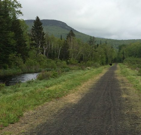 Gorham, NH: trafic on the trail. Black spot is a bear.