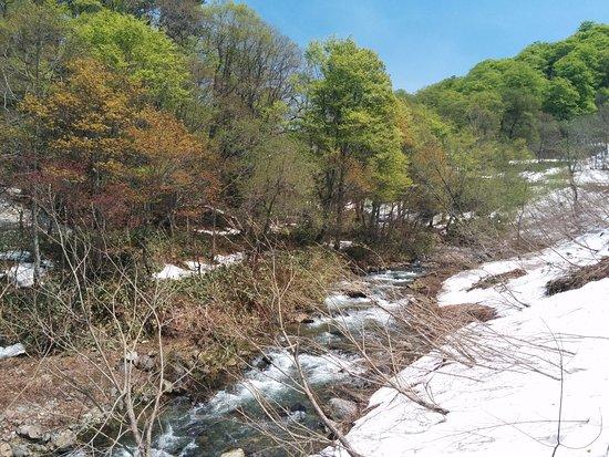 Okutone Suigennomori: 5月末、まだ雪がかなり残っていて危険なので歩けない