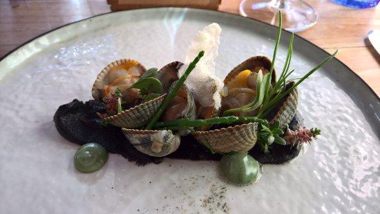 West-Terschelling, Países Bajos: Het wad met zijn schelpdieren
