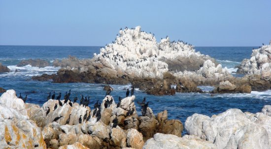 Kleinmond, Sydafrika: Snorkel, diving and angling