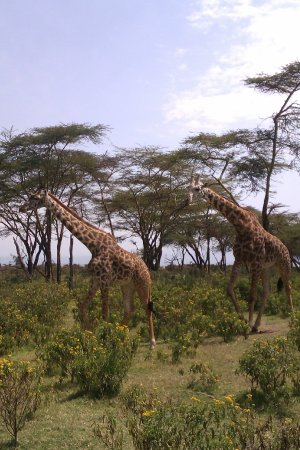 Rift Valley Province Photo