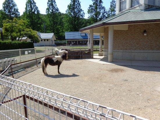 Gifu City Chikusan Center Park