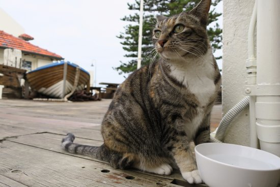 Seawall Apartments: Dophinfish the Cat