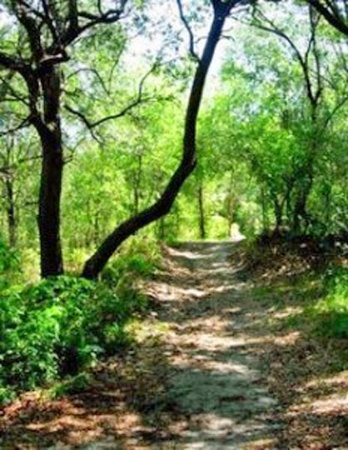 Trail in Lake Rogers Park That Goes Around the Lake