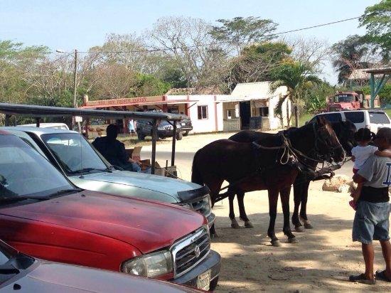 San Ignacio Market: Mennonite horse & buggy parked among the modern cars.