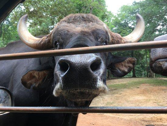 Pine Mountain, GA: Many animals