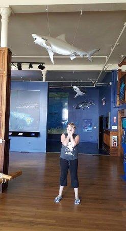 Mokupapapa Discovery Center: Ahhh A Shark!!!