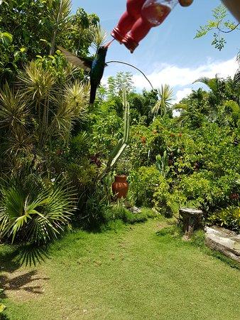 Barney's Flower & Hummingbird Garden Jamaica: einfach schön