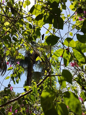 Barney's Flower & Hummingbird Garden Jamaica: natur pur