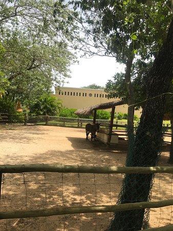 Sandos Playacar: Donkey