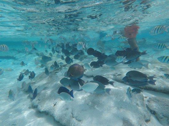 Foto de cayo el acuario san andr s variedad de peces for Variedad de peces