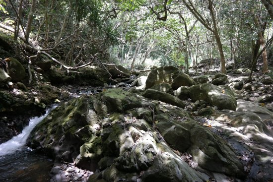 Makawao, HI: Jungle River