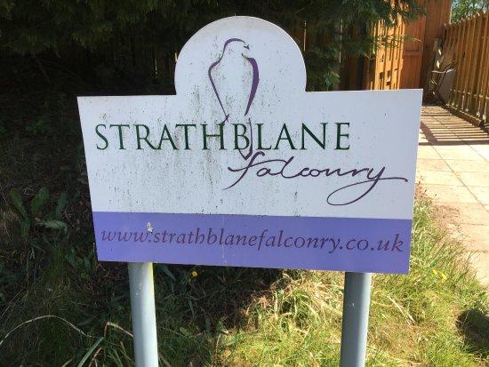 Wonderful day at Strathblane Falconry!!