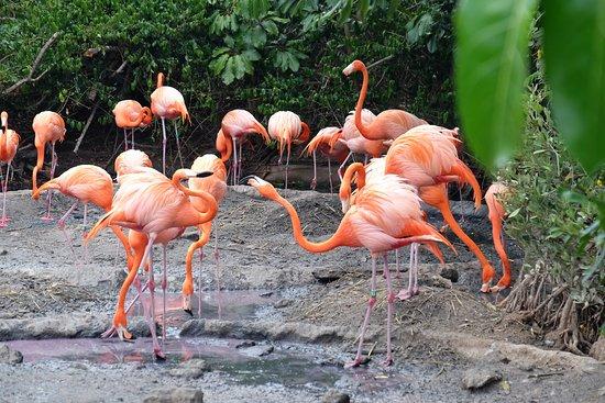 Hamilton, Bermuda: flamingos