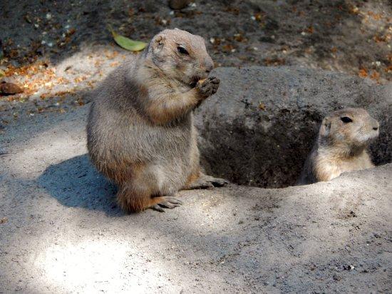 Salisbury Zoo照片