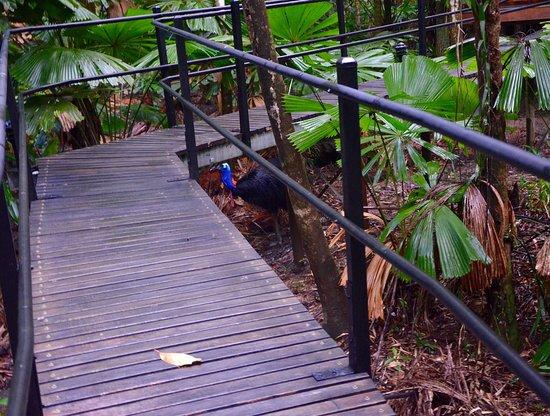 Diwan, Australia: photo3.jpg