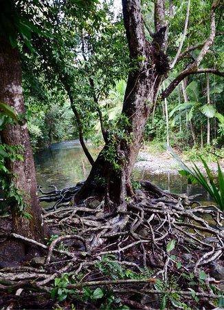 Diwan, Australia: photo5.jpg