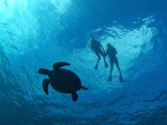 Piti, Mariana Islands: Sea Turtle & Snorkeling