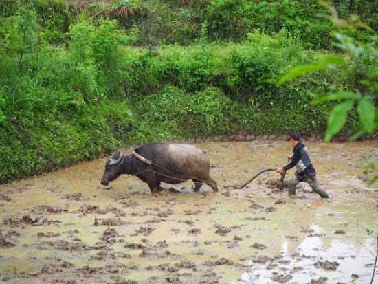Zhenyuan County, China: villager living on top of Shipin Mountain