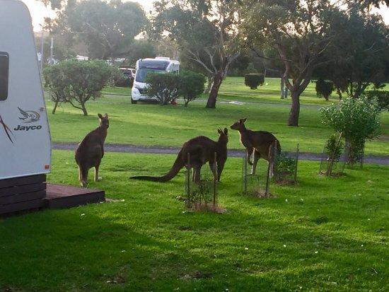 Anglesea, Australia: photo2.jpg